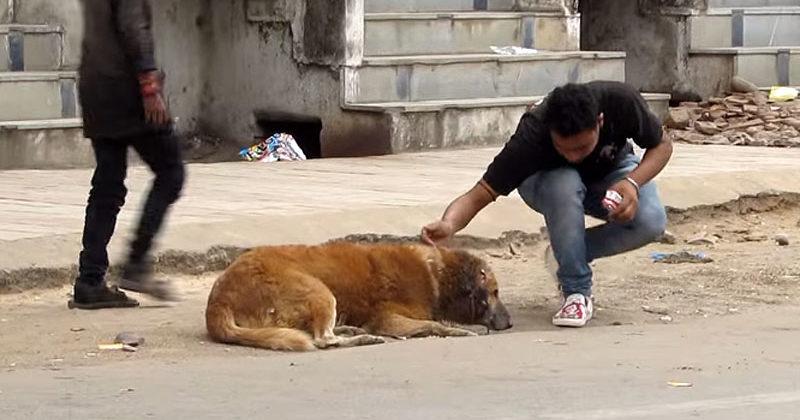 dog rescue videos 2017