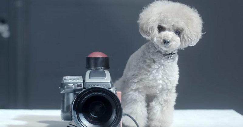 Best Chub Chubby Adorable Dog - 15262397935014-800x420-1454949596  HD_495969  .png
